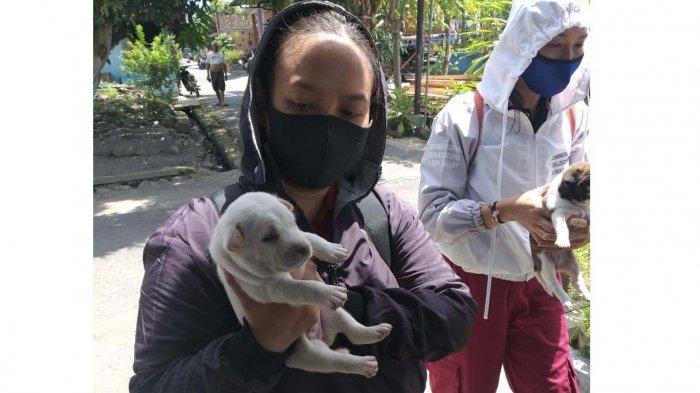 Kesmavet Jembrana Bali Selamatkan Tiga Anak Anjing Terlantar