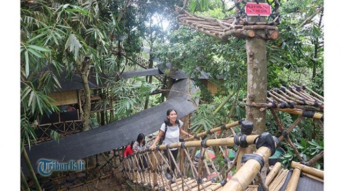 Rumah Pohon Temega, Liburan Seru Tak Harus Mahal, Bermain di Atas Pohon Layaknya Tarzan