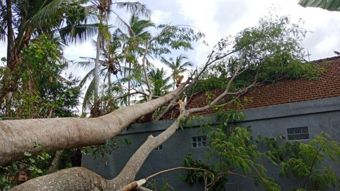 Pohon Tumbang Timpa Dua Rumah Warga di Klungkung