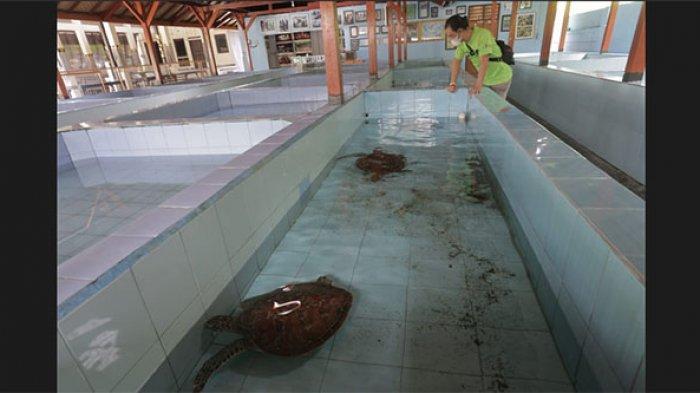 Semenjak Pandemi Covid-19, Kunjungan Wisatawan ke TCEC Serangan Denpasar Mengalami Penurunan Drastis