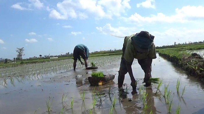 Dewan Minta PDDS Maksimalkan Beli Hasil Pertanian Tabanan, Eksekutif Belum Bahas Seleksi Direksi