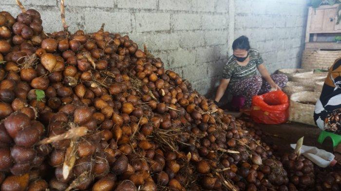Salak Sibetan Mulai Diminati Pasar di NTB, Permintaan Perminggunya Capai 3 Ton