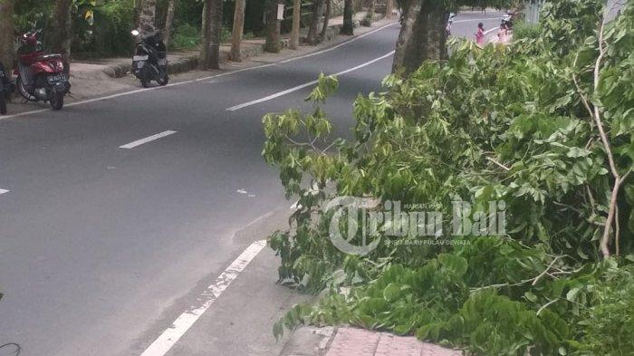 Sampah Dedaunan Menumpuk di Trotoar, Ini Tanggapan Kepala DKLH Gianyar