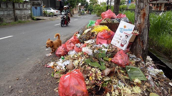 5 Hari Sebelum GalunganVolume Sampah di Kota Amlapura Meningkat 3 Kali Lipat