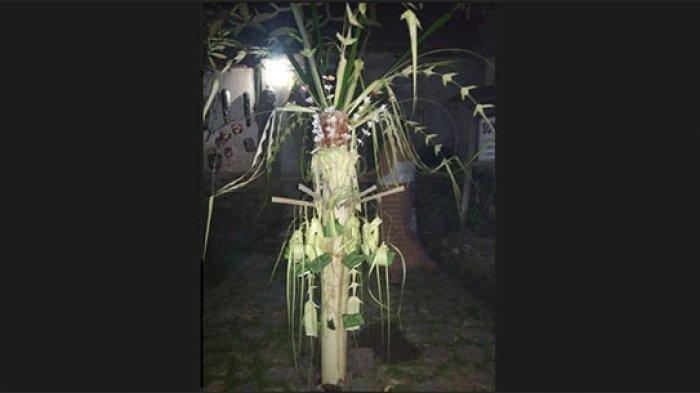 Tradisi Memasang Sanggah Gedebong di Desa Tenganan Karangasem, Simbol Rasa Syukur ke Sang Pencipta