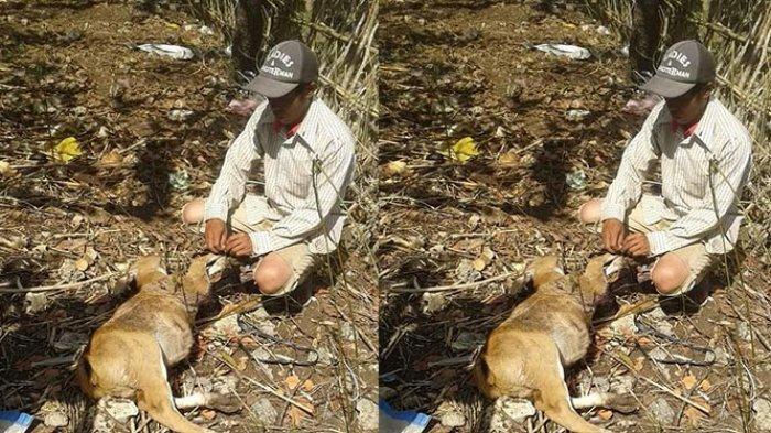 Peternak di 3 Banjar Resah Sapi Mati Misterius, Warga Duga Ulah Anjing Liar yang Kelaparan