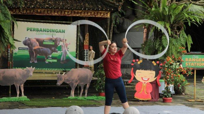 Satwa Endemik Indonesia Ini Meriahkan Perayaan Imlek 2021 di Bali Safari Park