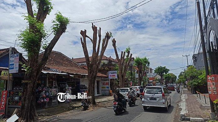 DLHK Denpasar Lakukan Perompesan Pohon Antisipasi Musim Penghujan, Siapkan Asuransi Rp100 Juta