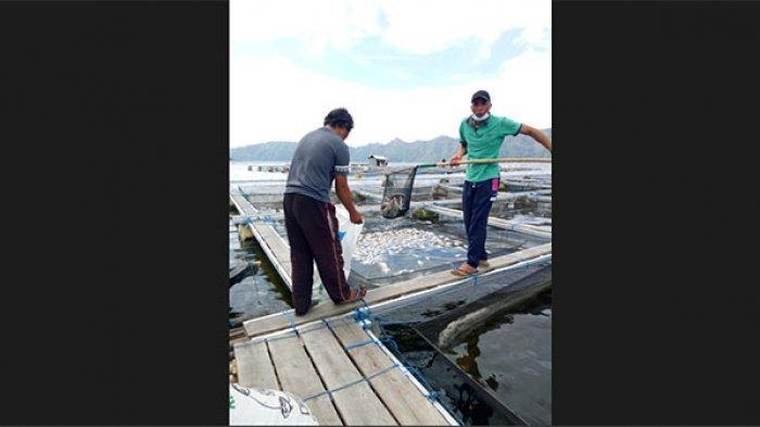 Fenomena Semburan Belerang di Danau Batur Bangli Meluas, Kini Bergeser ke Desa Songan
