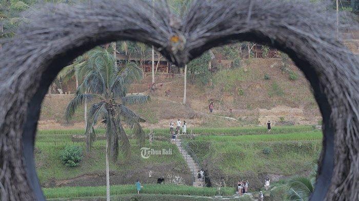 Subak di Bali yang Jadi Warisan Budaya Dunia Bakal Musnah pada 2030, Ini Penyebabnya