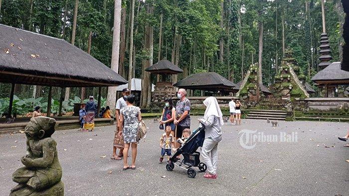 Dampak Covid-19 di Bali, Kunjungan Wisatawan di Objek Wisata Sangeh Tak Sampai 1.000 Orang