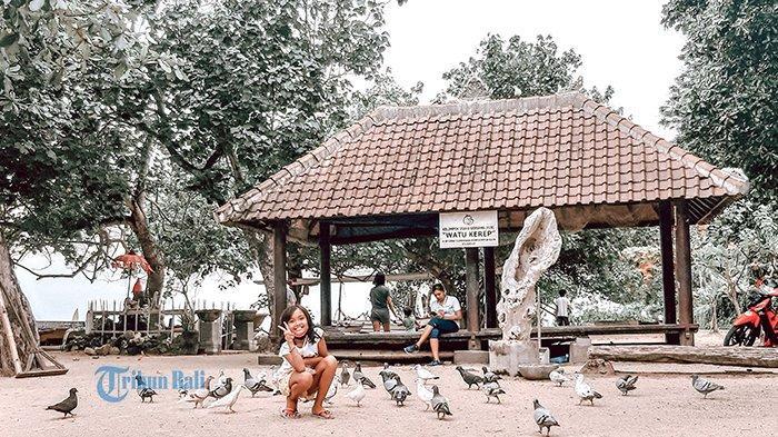 WIKI BALI - Daya Tarik Objek Wisata Pantai Karang Sanur, Spot Foto Pohon Merak dan Kawanan Merpati