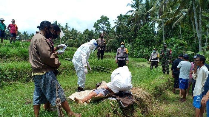 Petani di Tabanan Ditemukan Tergeletak di Pematang Sawah, Diduga Kelelahan Seusai Membajak Sawah