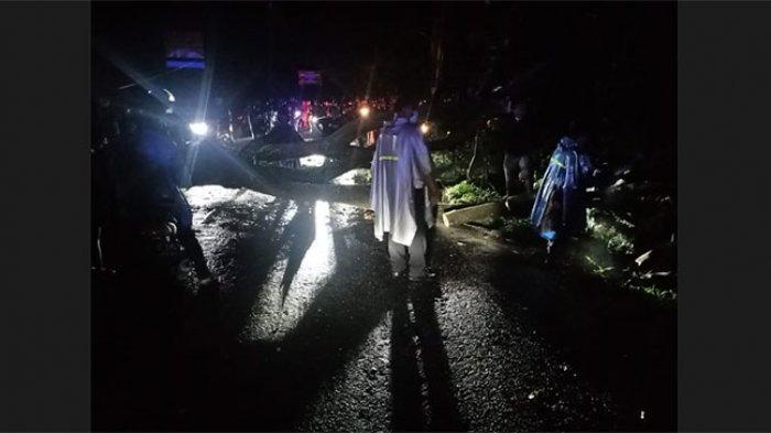 Pohon Albesia Tumbang ke Jalan di Selemadeg Timur Tabanan, Lalulintas Sempat Lumpuh 70 Menit