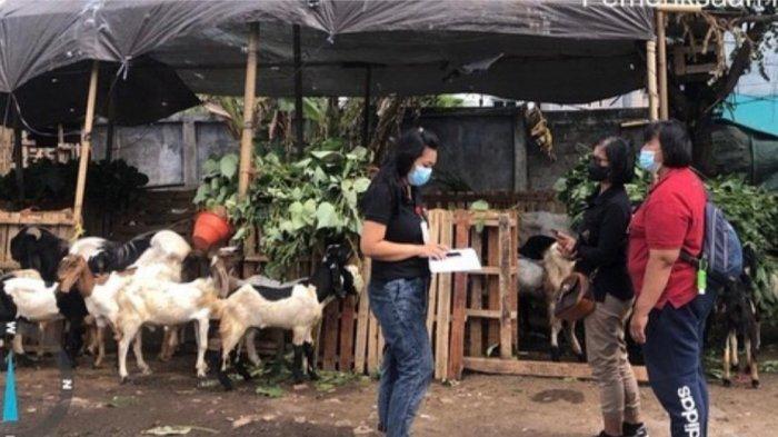 Dinas Pertanian Kota Denpasar Melaksanakan Pengecekan Hewan Kurban, Terjunkan 22 Personil Tim