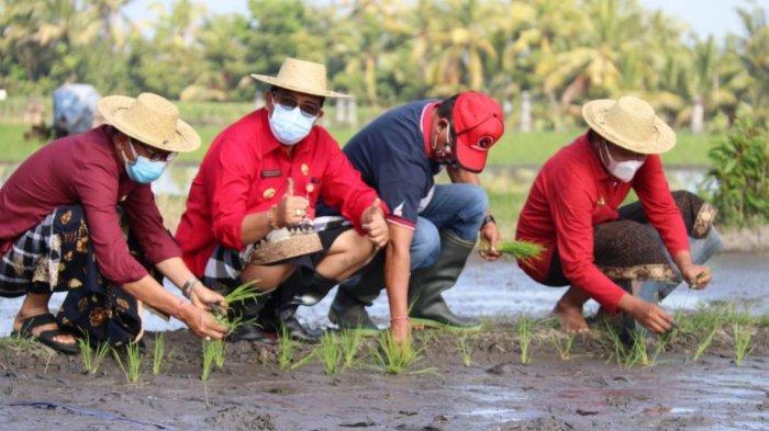 Antisipasi Kerugian di Musim Kemarau, Petani di Selemadeg Tabanan Diimbau Tanam Palawija