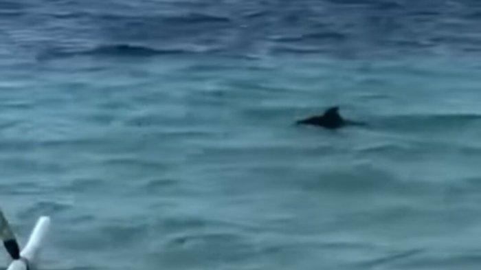 Lumba-lumba Terlihat di Pantai Semawang Denpasar, Ahli Ekosistem Laut Unud : Tanda Ekologi Membaik