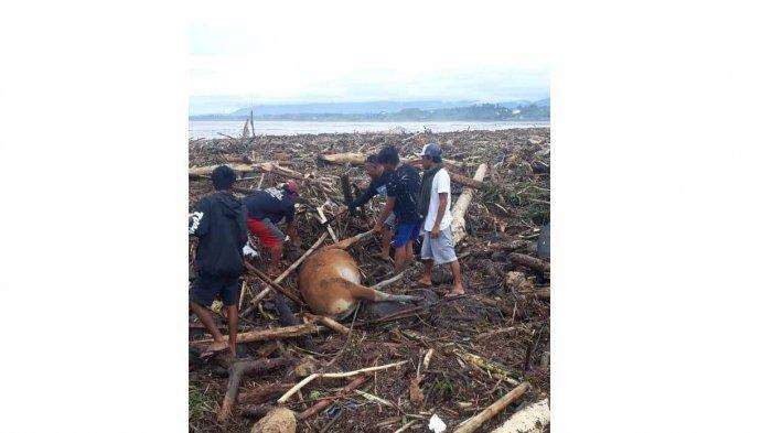 Banjir Bandang di Pekutatan Hantam 12 Rumah Warga, Sembilan Sapi Mati dan Puluhan Ayam Hilang
