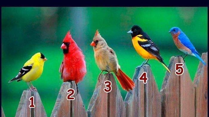 Tes Kepribadian: Pilih Satu Burung yang Paling Kamu Sukai, Lihat Mana Karakter yang Paling Dominan