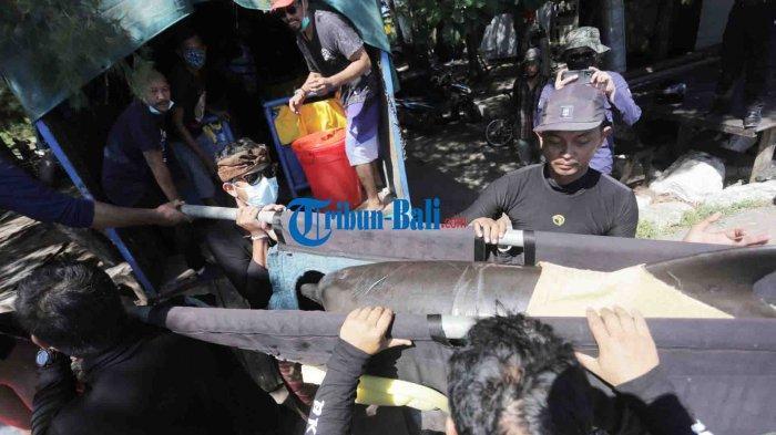 Sempat Ditunggangi Lucinta Luna, 7 Lumba-lumba di Dolphin Lodge Bali Dievakuasi