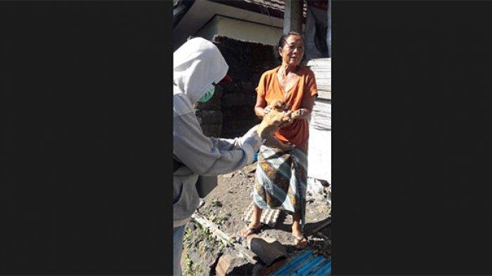 Dua Warga Desa Buahan Digigit Anjing Rabies, Dinas PKP Bangli Lakukan Vaksinasi dan Eliminasi Anjing