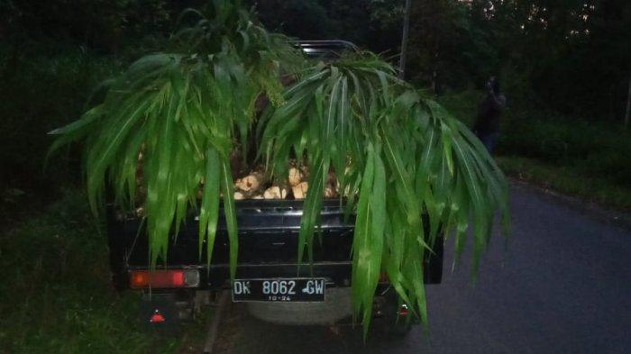 Polsek Rendang Amankan Pelaku Illegal Logging di Karangasem Bali