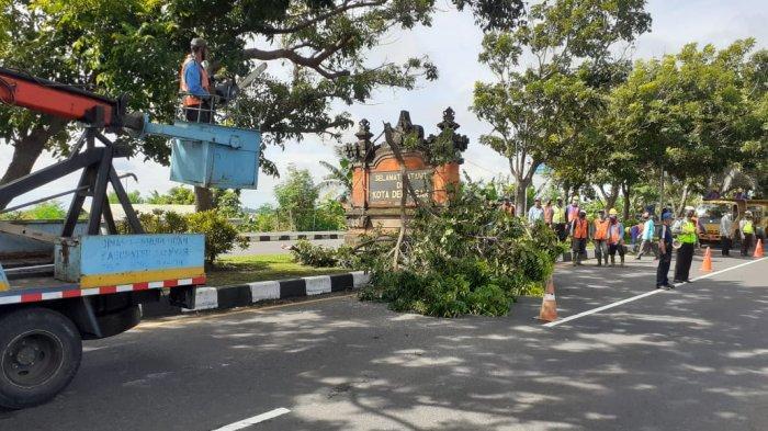 Antisipasi Pohon Tumbang, Tim Gabungan di Gianyar Bali Inspeksi Pohon di Jalur By Pass IB Mantra