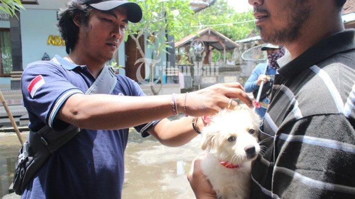 Prioritas Penanganan Rabies di 3 Zona Merah, Gelontorkan Rp 23 M Menuju Bali Bebas Rabies 2020