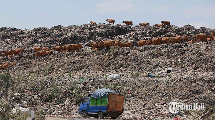 Walhi Tolak Rencana Pemprov Bali Kelola Sampah Pakai Insinerator