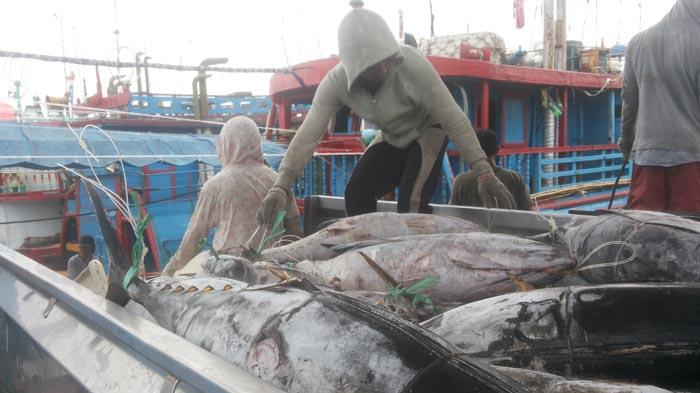 Ekspor Produk Perikanan Bali Lancar di Masa Pandemi, Made Sudarsana: Nampaknya Masih Tetap Bertahan