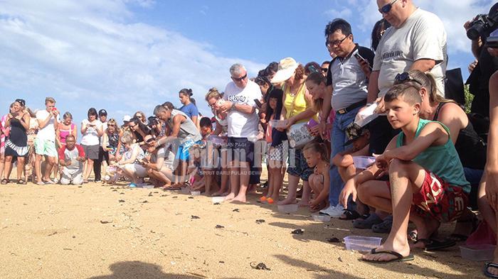Prama Sanur Beach Lepas 50 Tukik di Pantai Mertasari