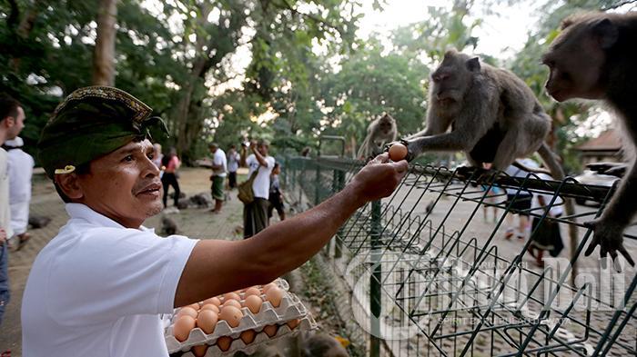 20 Destinasi Wisata di Ubud Bali dan Sekitarnya, Monkey Forest Hingga Arung Jeram Sungai Ayung