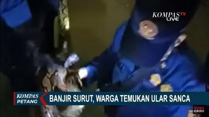 Ular Masuk Rumah Saat Banjir di Jakarta, Ular Sanca Sepanjang 3 Meter Bersembunyi di Kamar