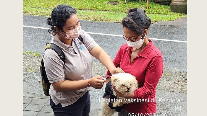 Masih Rendah, Cakupan Vaksin Anjing Rabies di Gianyar Baru 25 Persen