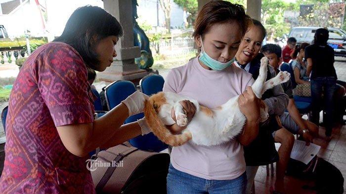 Cakupan Vaksin Rabies Tahun 2020 Hanya 4%, Tahun 2021 Distan Denpasar Siapkan 47.157 Dosis Vaksin