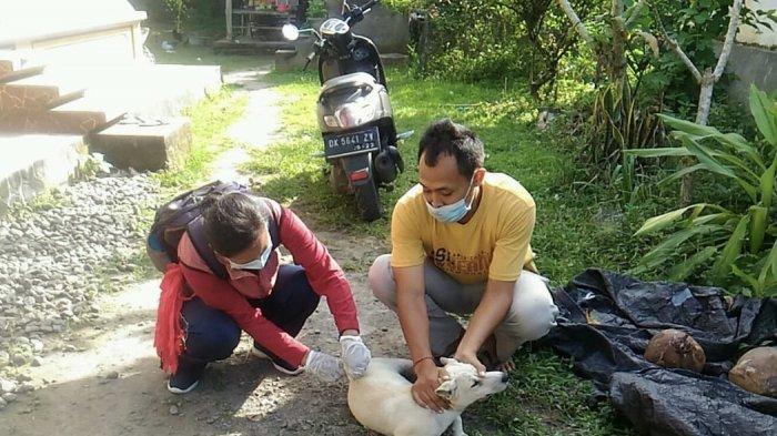 Dua Orang di Jembrana Kena Gigitan Anjing Positif Rabies