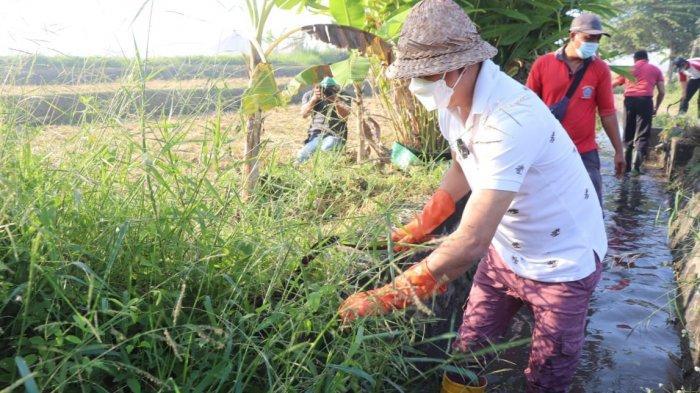 Buka Padat Karya Tunai Desa Munggu Badung, Wabup Suiasa: Pertanian Ini Menjadi Sektor Unggulan