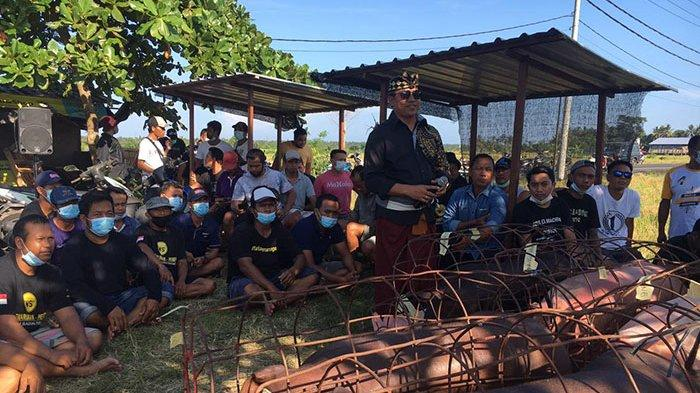 Suyasa Bagi Daging Babi Menjelang Galungan di Badung, Bukan Bermaksud Mencari Popularitas