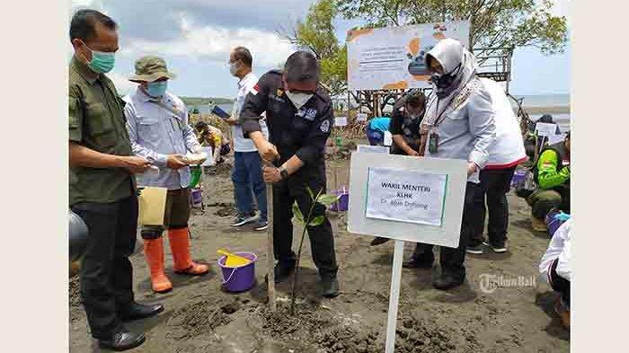 Masyarakat Pesisir Dilibatkan Program Padat Karya Penanaman Mangrove, Diupah Rp 110 Ribu Per Hari