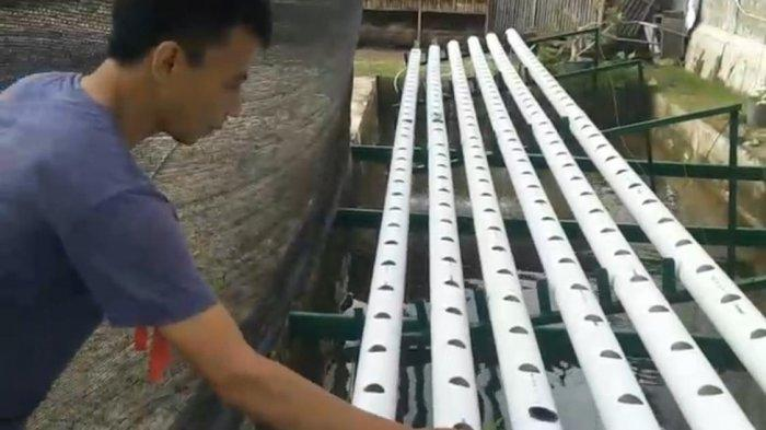 Warga Binaan Rutan Negara Kembangkan Hidroponik di Jembrana