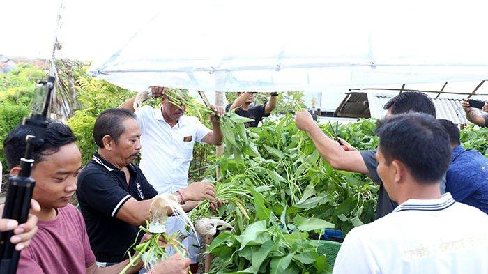 Upaya Kurangi Kemiskinan di Klungkung, 100 KK Miskin Akan Dilatih Bercocok Tanam Hidroponik