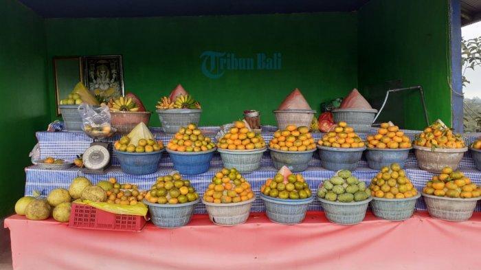 Kisah Penjual Jeruk di Jalan Raya Pujung Bangli, Mawi: Sehari Itu Dapat 30 Ribu, Kadang Tidak Dapat
