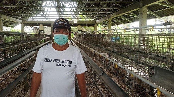 Harga Telur Anjlok, Sejumlah Peternak Ayam Petelur di Desa Getasan Badung Beralih Pelihara Itik