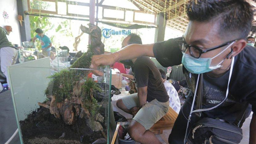 Adu Seni Dekorasi Dalam Akuarium 30 Peserta Ikuti Kontes Aquascape Se Bali Di Denpasar Tribun Bali