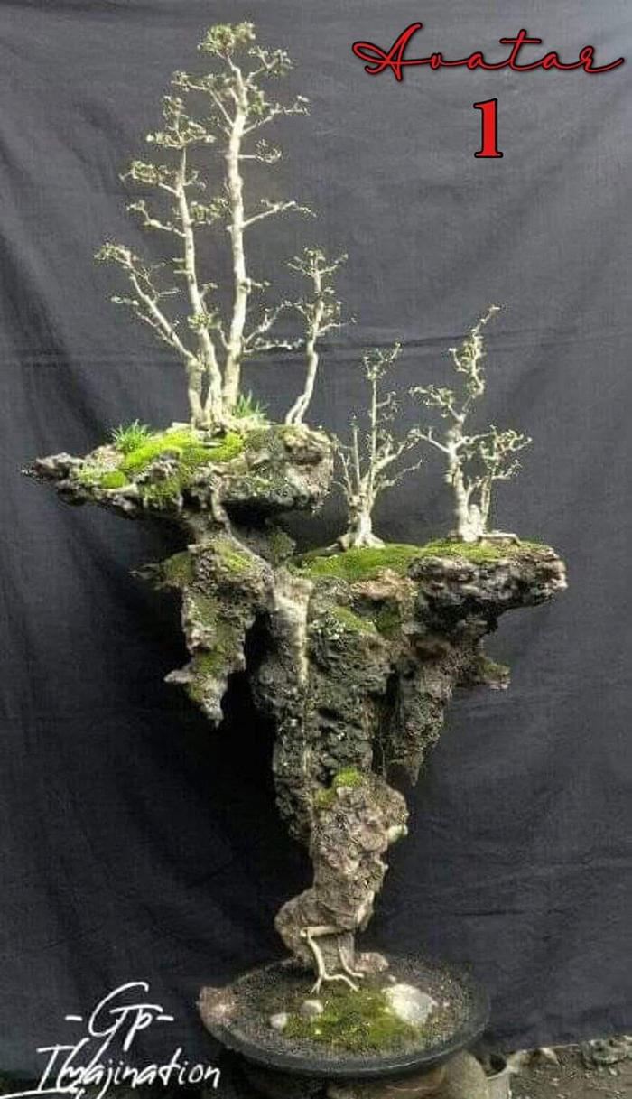 Bonsai Avatar 1