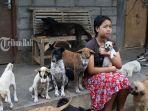 anjing-anjing-setia-mengikuti-gung-dewi_20180401_080925.jpg