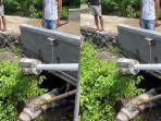 bangkai-seekor-babi-tergeletak-di-aliran-sungai-di-badung.jpg