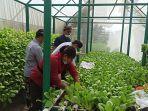 beberapa-petugas-saat-melakukan-panen-sayur-di-rumah-hidroponik-di-bpp-kecamatan.jpg