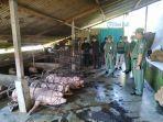 bidang-keswan-dinas-pertaniansaat-mengecek-kesehatan-babi.jpg
