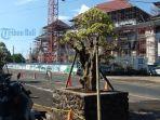bonsai-penghias-pasar-umum-gianyar-jadi-perhatian-masyarakat.jpg